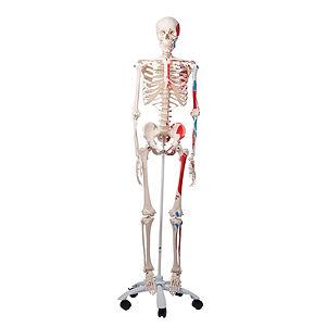 Esqueleto Ciedutec Lab