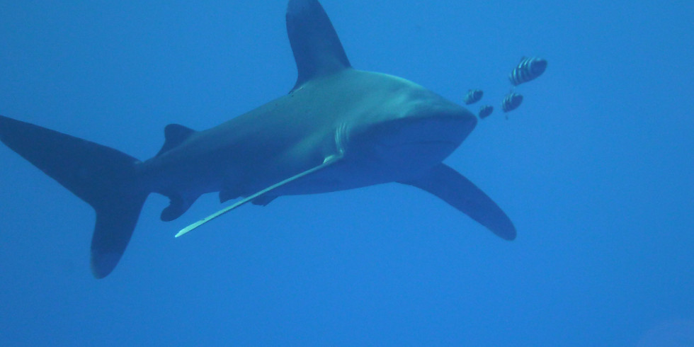 Red Sea 'Project Shark' liveaboard