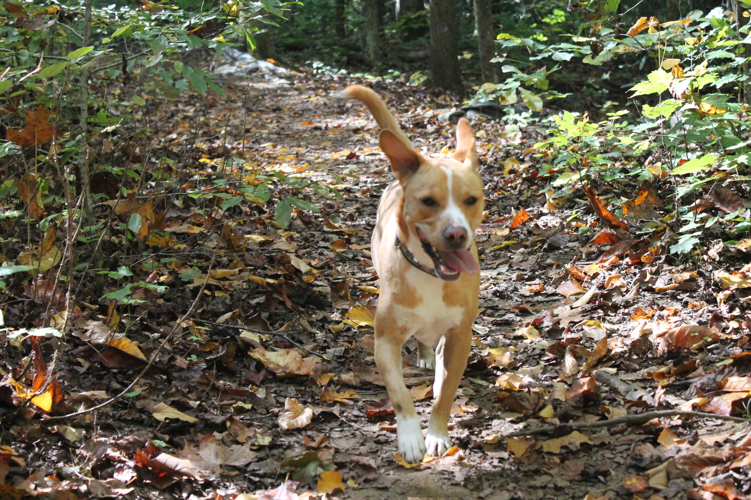 Sanuk, Polk County trails dog