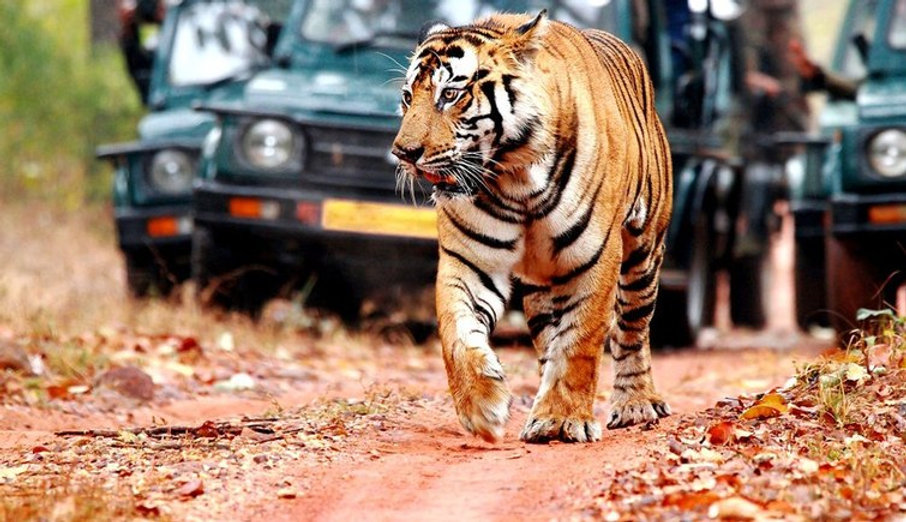 Ranthambore-National-Park-Daftar.jpg