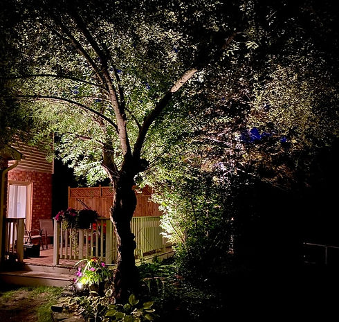 Apex Outdoor Systems, Landscape Lighting Toronto, Landscape Lighting Oakville, Outdoor Lighting, Custom Outdoor Lighting Toronto, Uplighting Toronto, Custom Outdoor Lighting Burlington