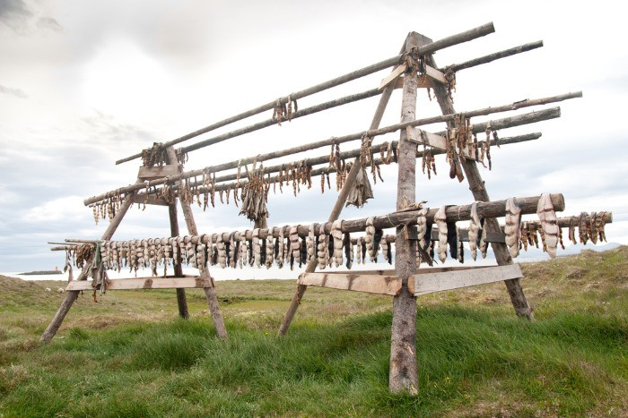 Icelandic dry fish left hanging to cure outdoors