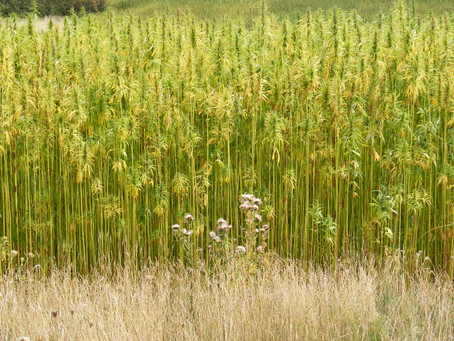 Can Hemp Save The Planet