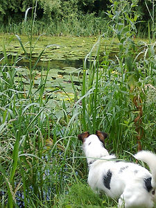 dog and canal.jpg
