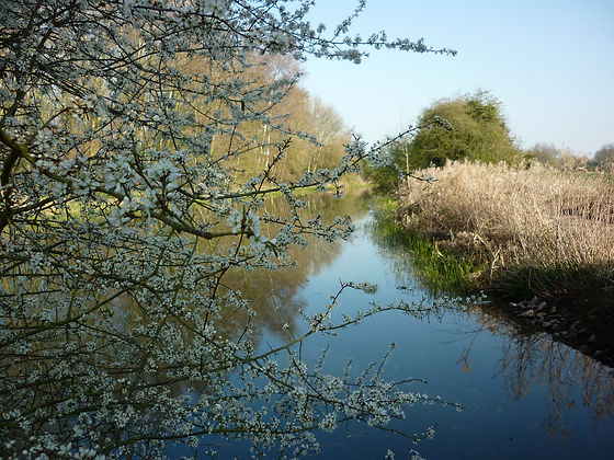 Canal and blossom.jpg