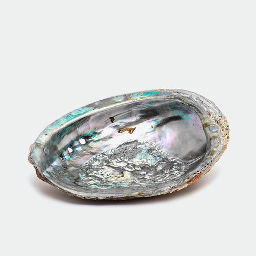 Abalone Shell (smudge bowl)