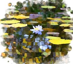 JARDIN de MONET モネの庭
