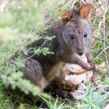 Tasmania タスマニア