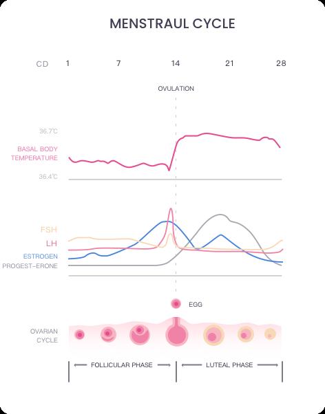 Basal Body Temperature Graph