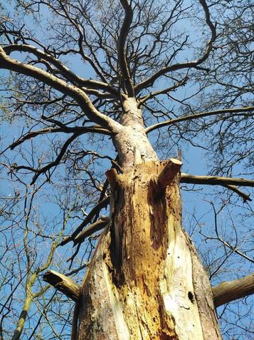 Dead Pine Takedown