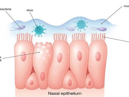 آلية الجهاز التنفسي للقضاء على الميكروبات
