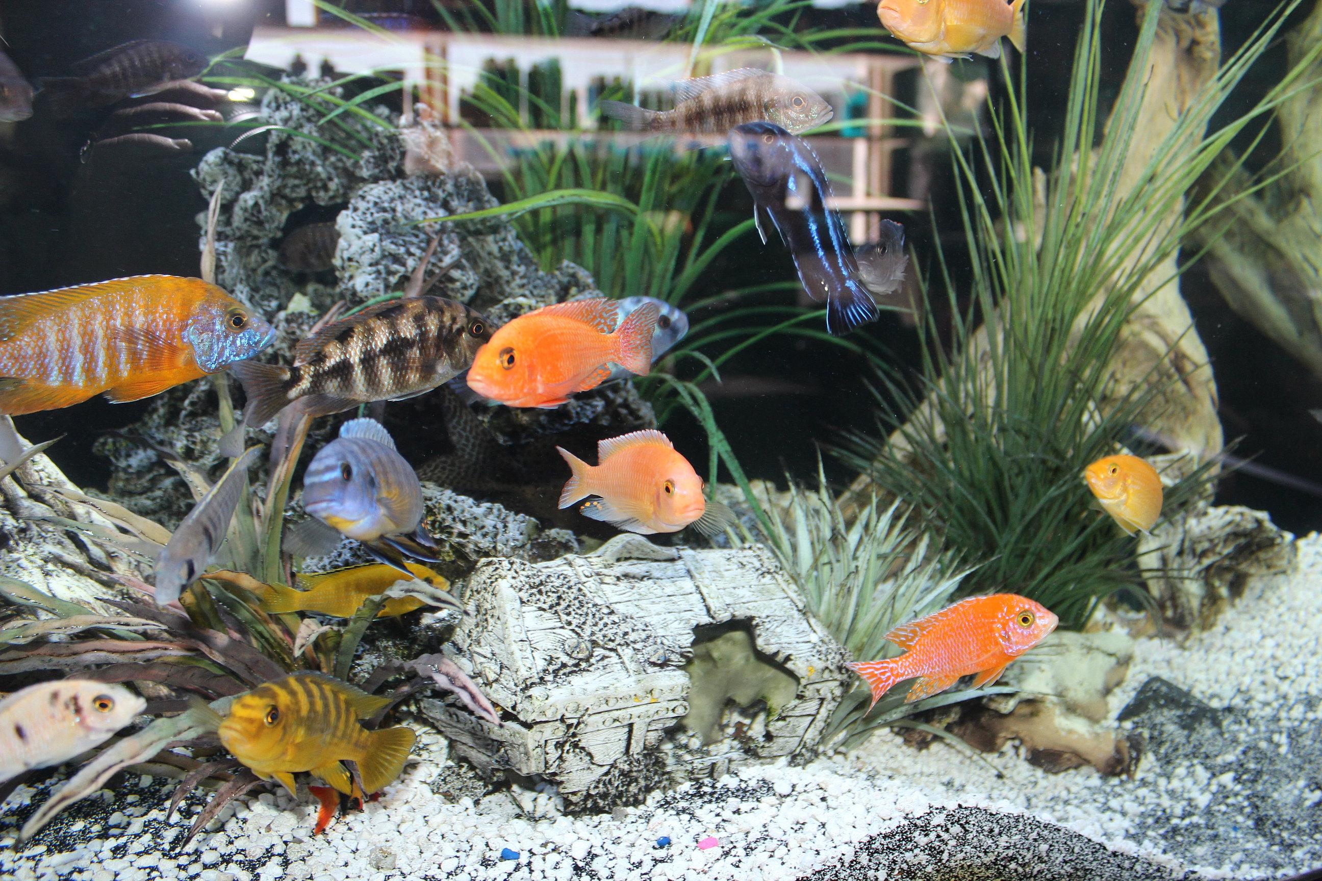 Fish aquarium market in delhi - Img_3401