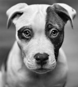 black-and-white-dog-eyes-face-photography-Favim.com-450046