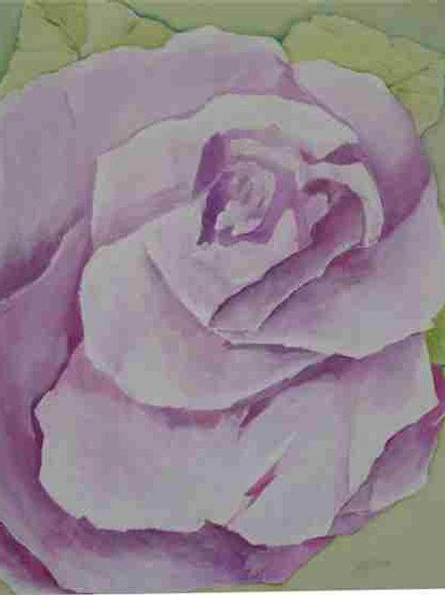 Original - Rose in Bloom