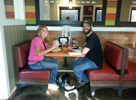 Why ODOR Service Dogs Inc. was created.