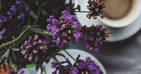 Purple flowers with white cups