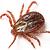 Ticks-Northeast Region Pest Control