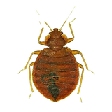 Bed Bug Pest Control: Northeast Region Pest Control