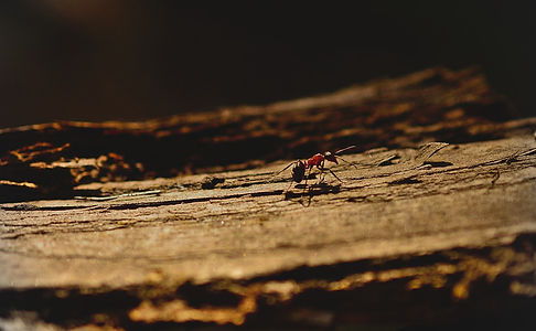 Ants: Types, Facts, & How To Get Rid Of Ants | NE Region Pest Control