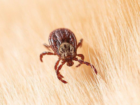 How To Prepare For A Bad Tick Season In Rhode Island