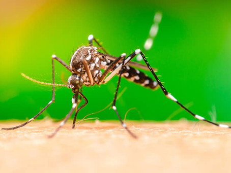 4 Ways To Protect Yourself From The Zika Virus