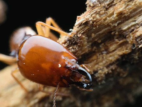 Know The Signs Of Termite Activity On Your Property
