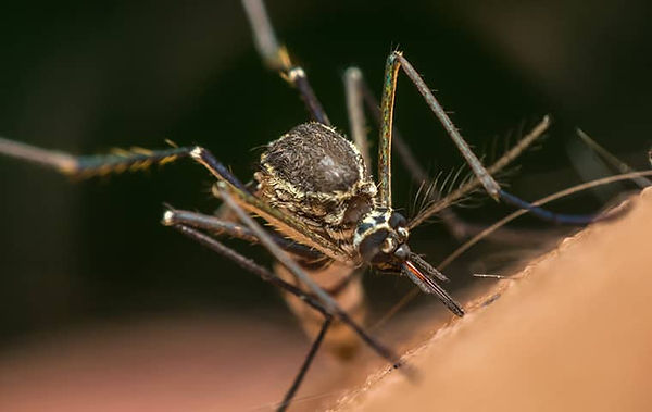 are-mosquito-borne-illnesses-a-threat-to