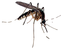 Mosquito Pest Control: Northeast Region Pest Control