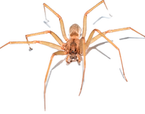 Spider Pest Control: Northeast Region Pest Control
