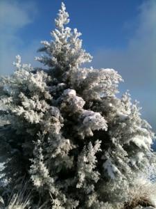 Eating for Optimal Health – Winter