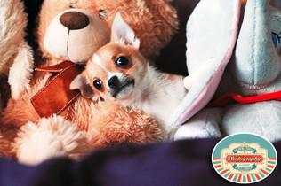 Cute doggy photos, fun alternative photographer in Brighton East Sussex