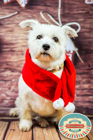 Recommended pet photographer in Brighton East Sussex, recommended pet photographer in eastbourne East Sussex, recommended pet photographer in East Sussex