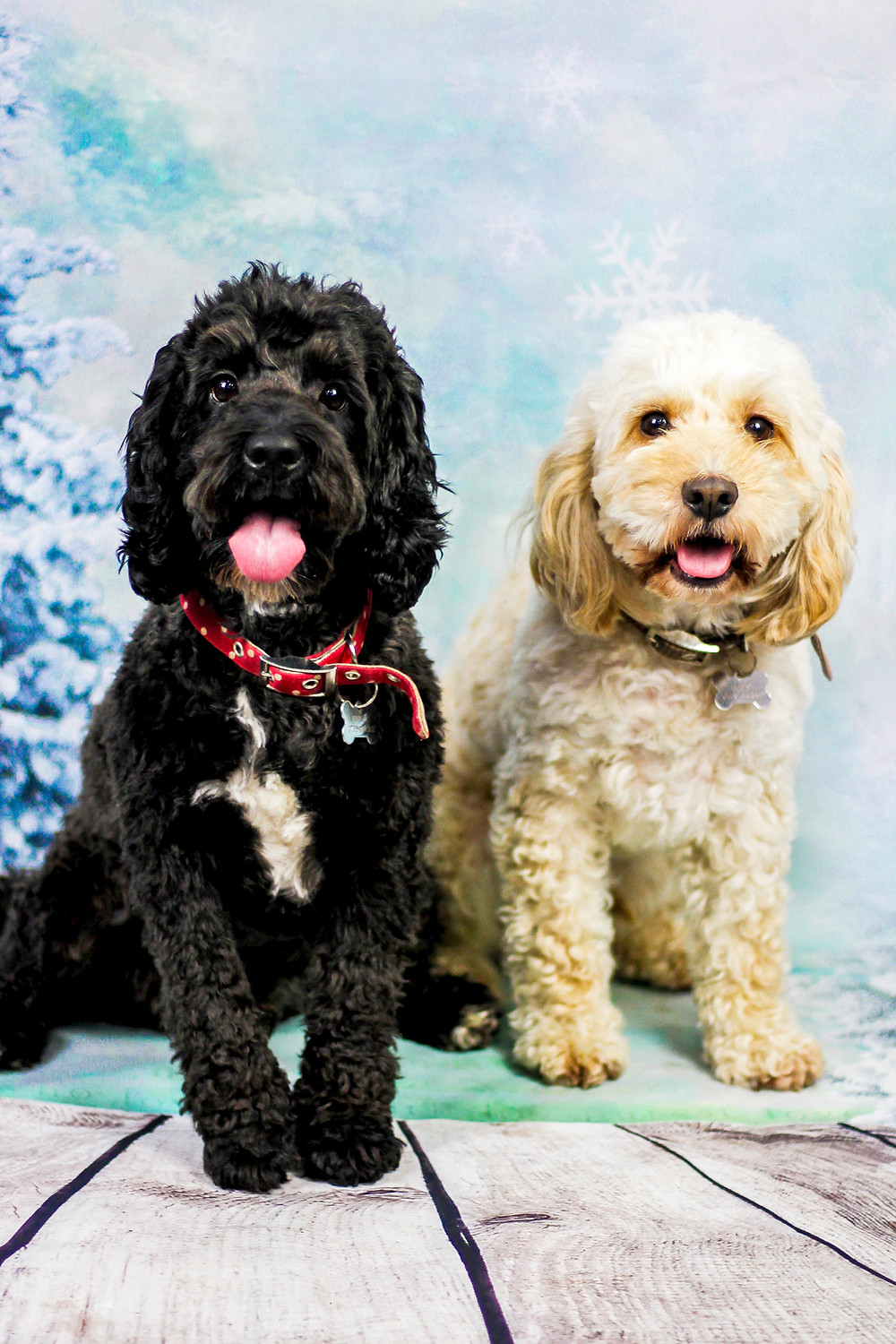 cute doggy photos in brighton east sussex