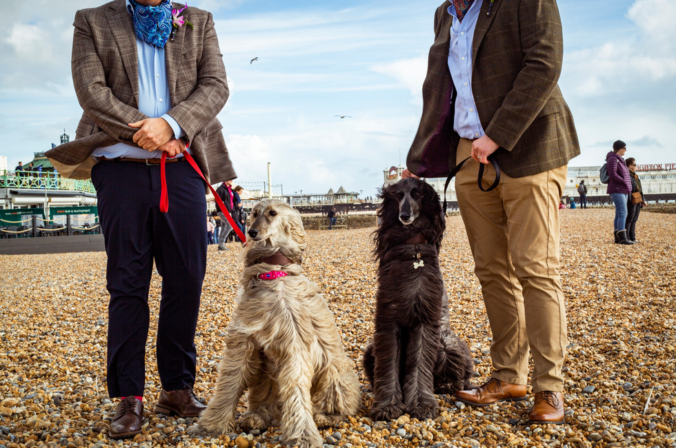 Civil Partnership marriage with Afghan hounds on Brighton Beach UK