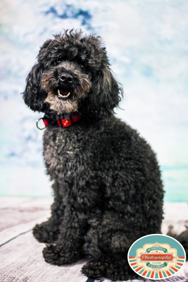 freelance pet photographer in brighton