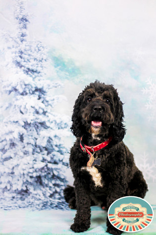 pet photography in eastbourne