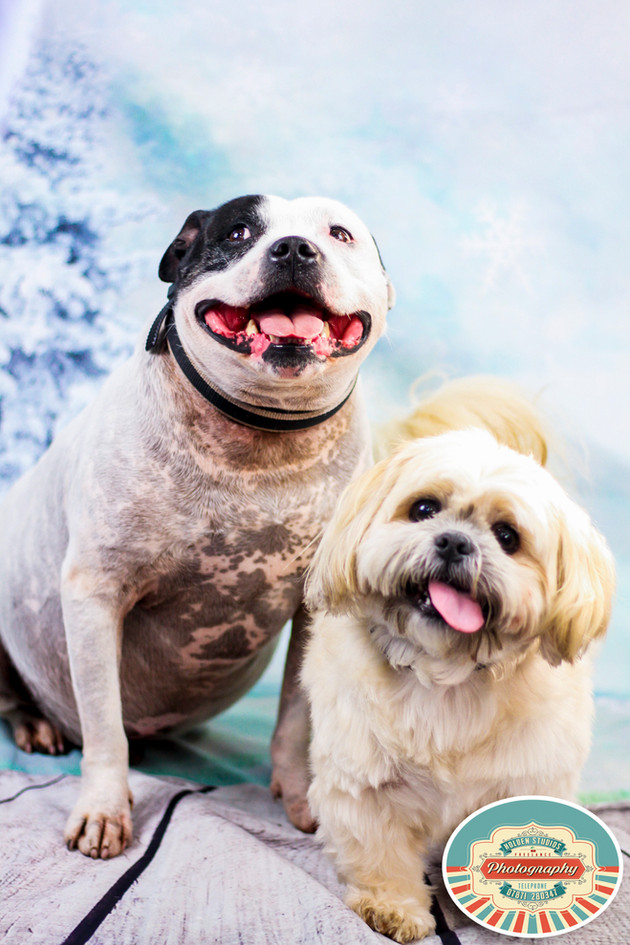 pet photographer in peacehaven