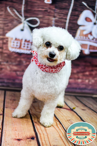 pet photographer in lewes