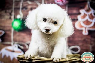 Freelance pet photographer, holden studios pet photographer, freelance doggy photos in Brighton, freelance pet photographer in Brighton East Sussex