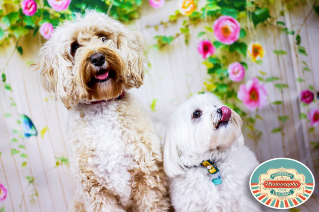 pet photographer in eastbourne