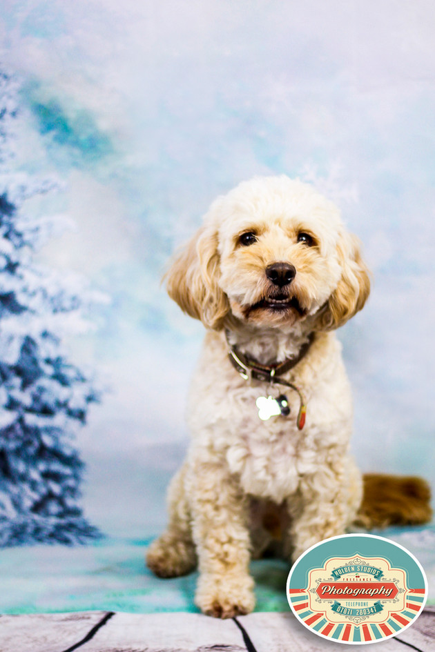 pet photography in east sussex