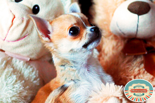 Fun and cute pet photographer in Brighton East Sussex, fun and cute freelance photography in Brighton East Sussex