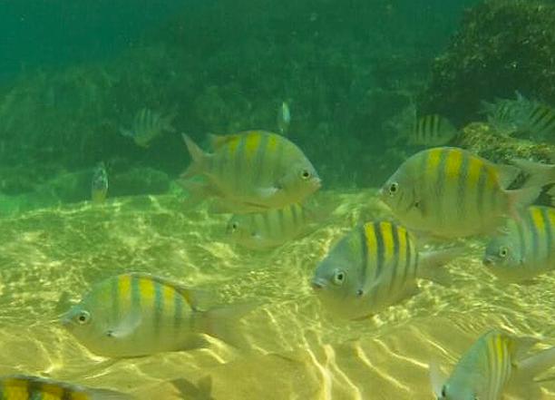 Peixinhos Ilha Anchieta, Praia do Sul