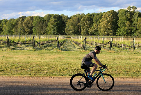 cyclist riding by vineyards