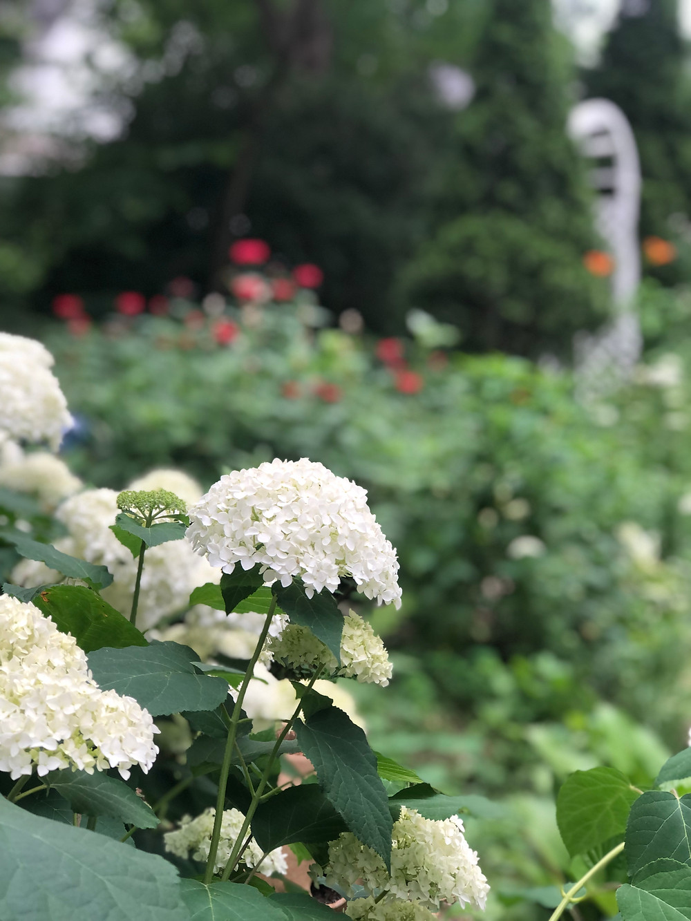 My Garden, 2021