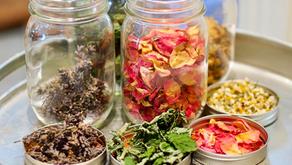 Herbal Tea Garden – The Mint Family