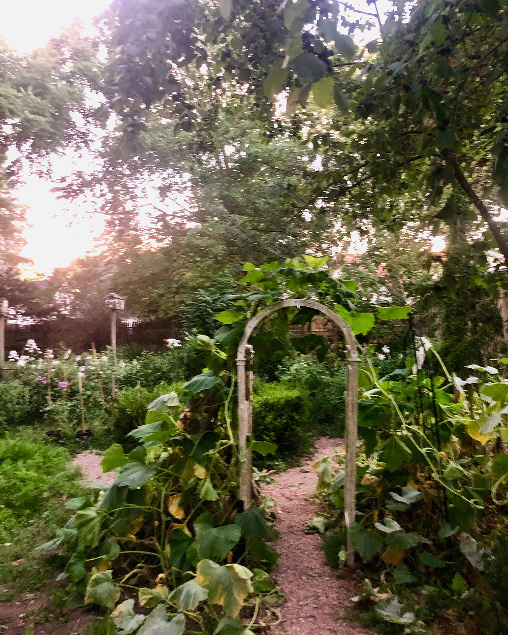 The Victory Garden at Perennial House