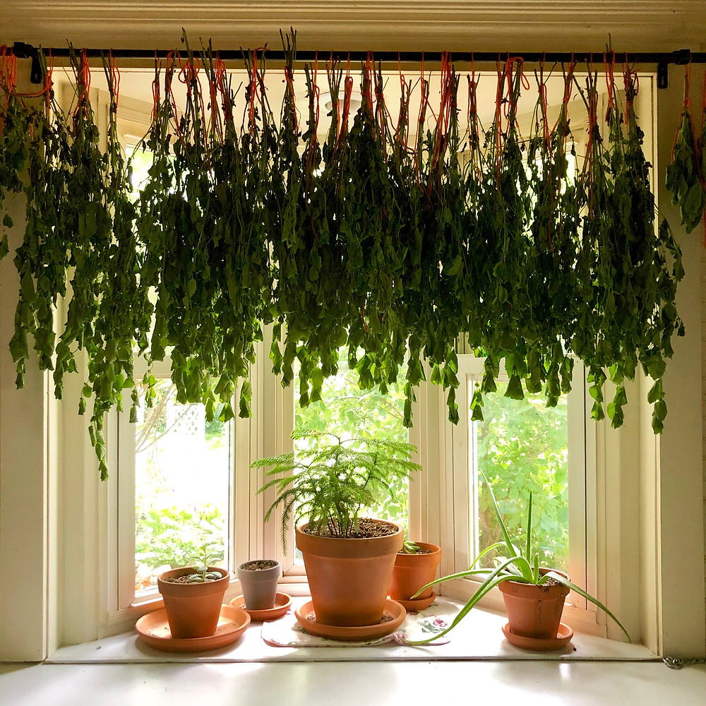 Hanging Lemon Balm to Dry in my Kitchen