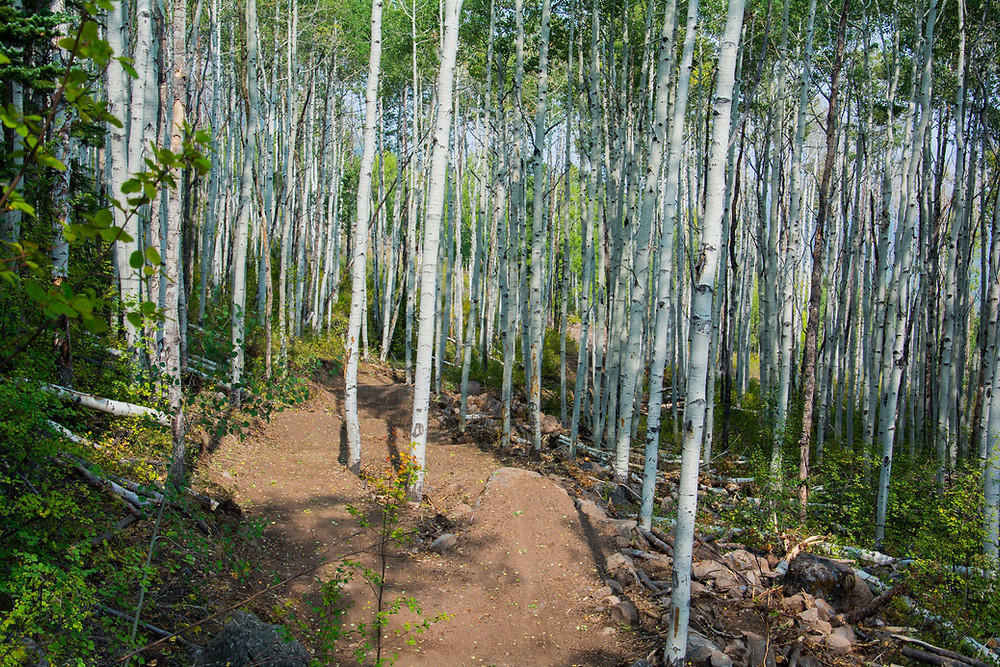 mountain bike dirt jump line surrounded by aspen trees