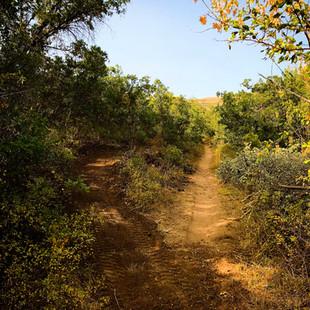singletrack-trails-mormon-pioneer-11.jpg